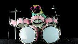 Мопс-барабанщик смотреть видео прикол - 1:20