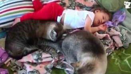 Смотреть Кошки общаются с малышами