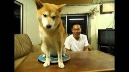 Назойливый хозяин и умный пёс смотреть видео прикол - 0:52