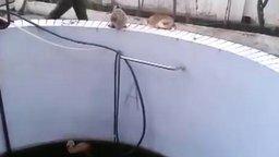 Кошачья взаимовыручка смотреть видео прикол - 0:47