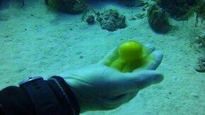 Смотреть Рыба ест сырое яйцо