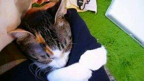 Смотреть Кот любит твою руку