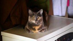 Вибрирующая кошка смотреть видео прикол - 0:38