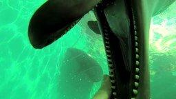 Смотреть Общительные дельфины