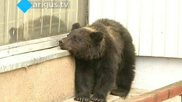 Смотреть Медвежонок в Улан-Удэ