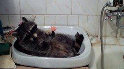 Смотреть Помылся - можно и мыло съесть!