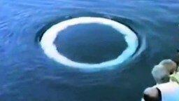 Смотреть Воздушный привет от кита