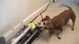 Смотреть Симпатичные щенята и смешные собаки