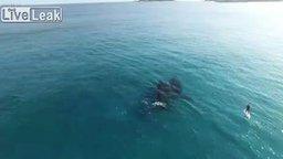 Смотреть Красивое видео с китами