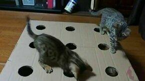 Смотреть Котята играют в коробке