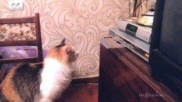 Смотреть Кошечка против дисковода