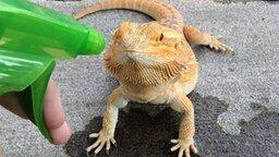 Смотреть Рептилия на водопое