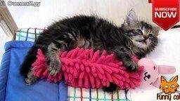 Смотреть Забавные моменты и ситуации с кошками