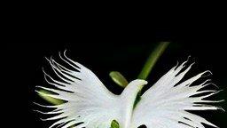 Самые живые цветы смотреть видео - 1:24