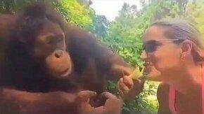 Смотреть Орангутан подшучивает над девушкой