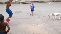 Смотреть Щенок развлекает детей со скакалкой