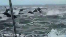 Смотреть Нашествие дельфинов