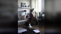 Пёс против вертолётика смотреть видео прикол - 0:15