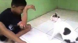 Смотреть Кошка против руки-змеи