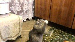 Кошка-танцовщица смотреть видео прикол - 0:32