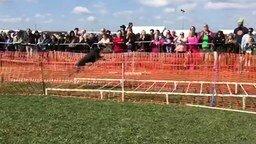 Смотреть Длинный собачий прыжок
