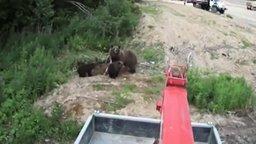 Медведица чуть не догнала смотреть видео прикол - 0:51