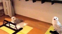 Наидовольнейшая совушка смотреть видео прикол - 0:17