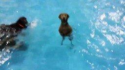 Я не хочу плавать, я хочу на сушу! смотреть видео прикол - 0:18