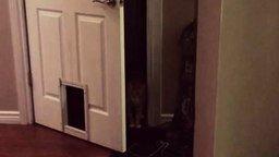 Смотреть Кот выпендрился перед кошкой