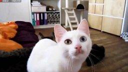 Кошки с человеческим ртом смотреть видео прикол - 0:51