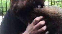 Смотреть Рысь и мужицкая борода