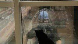 Смотреть Кошка играет с мойщиком окон
