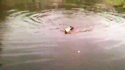 Пёс спасает кота смотреть видео прикол - 0:16
