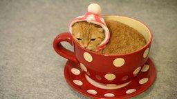 Смотреть Кот в чашке и в шапке