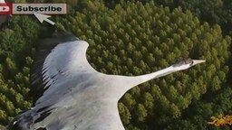 С высоты птичьего полёта смотреть видео - 5:50