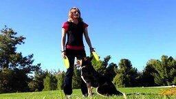 Собаки, которые вас покорят! смотреть видео прикол - 6:35