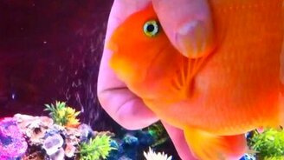 Рыбка, которая любит ласку смотреть видео прикол - 2:35