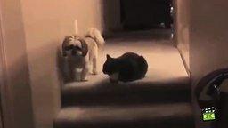 Вреднючие коты смотреть видео прикол - 6:06