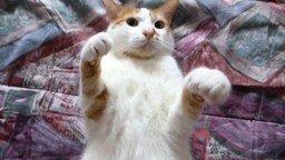 Дрессировка кота на замирание смотреть видео прикол - 0:55