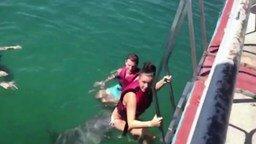 Смотреть Дельфину понравилась девушка