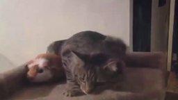 Кот против морской свинки смотреть видео прикол - 0:42