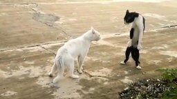 Много-много смешных и трогаетльных котиков смотреть видео прикол - 16:45