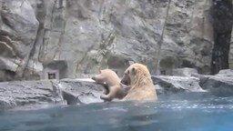 Смотреть Белая медведица спасает своего малыша
