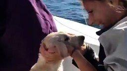 Спасение собаки в море смотреть видео прикол - 2:12