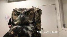 Как совы реагируют на камеру смотреть видео прикол - 1:26