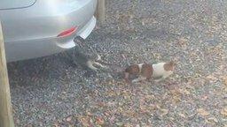 Котёнок против щенка за кусок мяса смотреть видео прикол - 0:32
