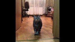 Кошка как собака смотреть видео прикол - 1:15