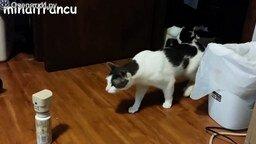 Смотреть Страшащиеся кошки
