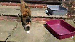 Смотреть Странно охрипшая кошка