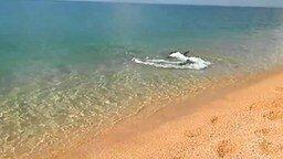 Дельфин-охотник у берега смотреть видео прикол - 2:18